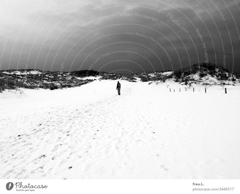 """""""Belgium,"""" she had said, """"to the coast,"""" and he had nodded ok, but now that he had lost his way in these barren snow-covered dunes, he cursed himself for it once and for all."""