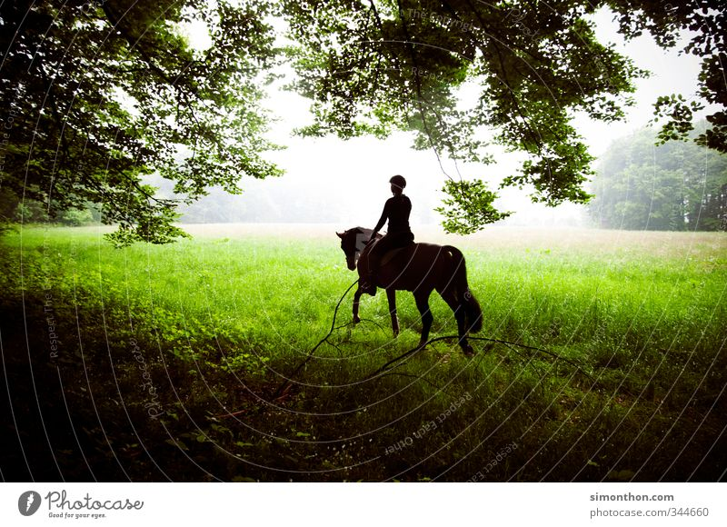 horseback riding Ride Hunting Equestrian sports Nature Meadow Field Forest Horse 1 Animal Adventure Contentment Movement Fragrance Relaxation Experience
