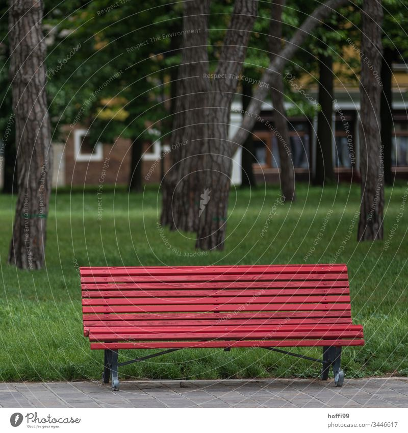 red bench in the park in front of green lawn Bench Red Seating Break Calm Relaxation Deserted Loneliness Meadow Green Shadow Vacation & Travel Day Sit Park
