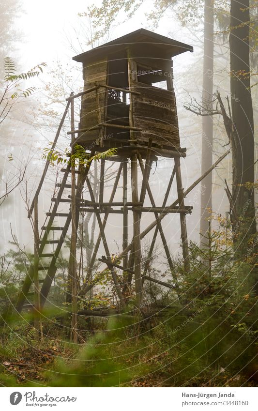 Wooden hunter's high seat at the edge of the forest in fog in the autumnal pine forest Hunting Blind perchet Fog Hunter Forest vantage point animals Green