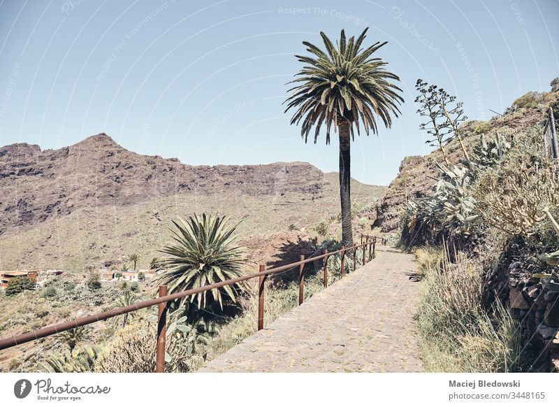 Path in the rural area of Teno massif, Tenerife, Spain. mountain palm path landscape retro summer Masca filtered nature Canary Islands sunny travel day photo