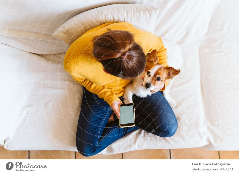 young woman using mobile phone, cute small dog besides. Sitting on the couch, wearing protective mask. Stay home concept during coronavirus covid-2019 pandemic