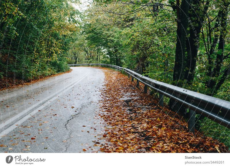 Autumn landscape, road in forest autumn fall nature tree path background green street Greece Evros Rodopi season light sun beautiful woods through leaves