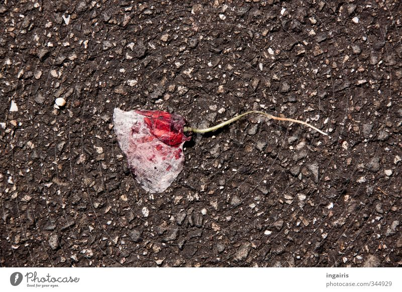 Plant Flower Environment Street Sadness Gray Blossom Pink Broken Transience Grief Dry Asphalt Destruction Tar Level