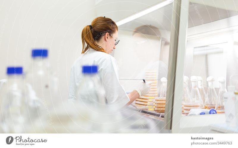 Female scientist working with bacteria in laminar flow at corona virus vaccine development laboratory research facility. science biotechnology COVID-19 cvid