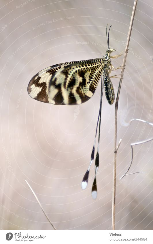 ...pole vault Nature Animal Wing Beautiful Insect Butterfly macro Colour photo Macro (Extreme close-up)