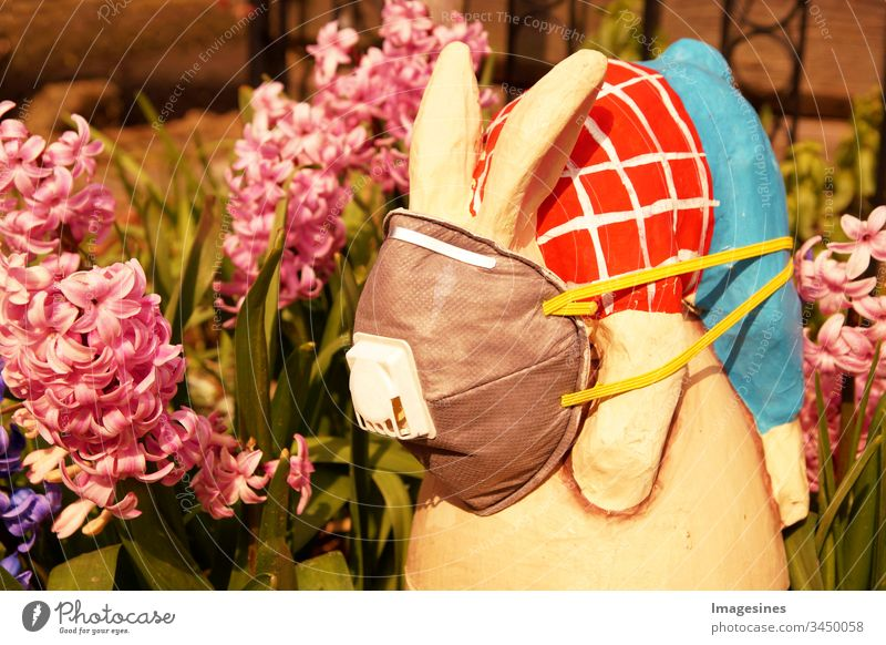 Easter bunny with protective medical face mask on garden background. Concept of Easter and quarantine during Coronavirus Covid-19 . Easter in the concept of Corona Days