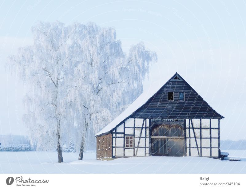next winter... Environment Nature Landscape Winter Beautiful weather Ice Frost Snow Tree Birch tree Village House (Residential Structure) Building Architecture