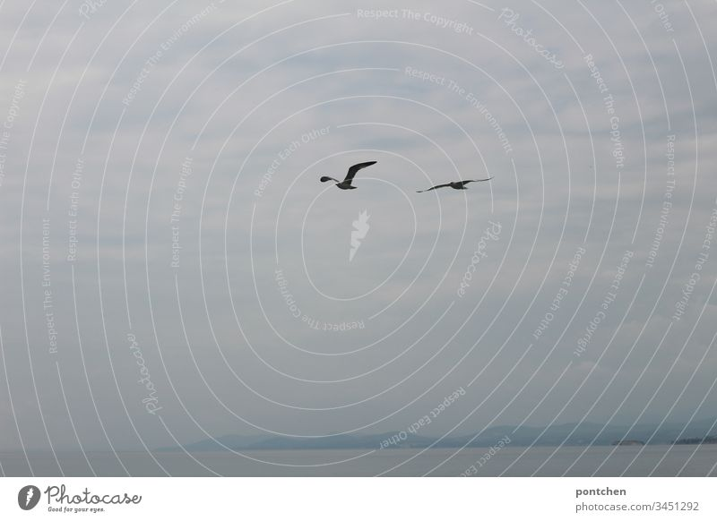 Two seagulls fly over the sea in front of a cloudy sky. birds Ocean Rock Clouds Fog Water Coast Landscape Flying Freedom Grand piano Swing Couple Blue White