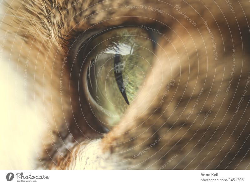 cat's eye view Beautiful Bright Pelt Animal Pet Cat Love of animals Colour photo Interior shot Deserted Day Animal portrait Animal face Looking Close-up