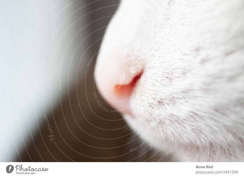 Cat's nose in daylight Animal portrait Day Deserted Interior shot Colour photo Love of animals Pet Cat's Nose Cat's Nose Pelt Pink Bright White Beautiful