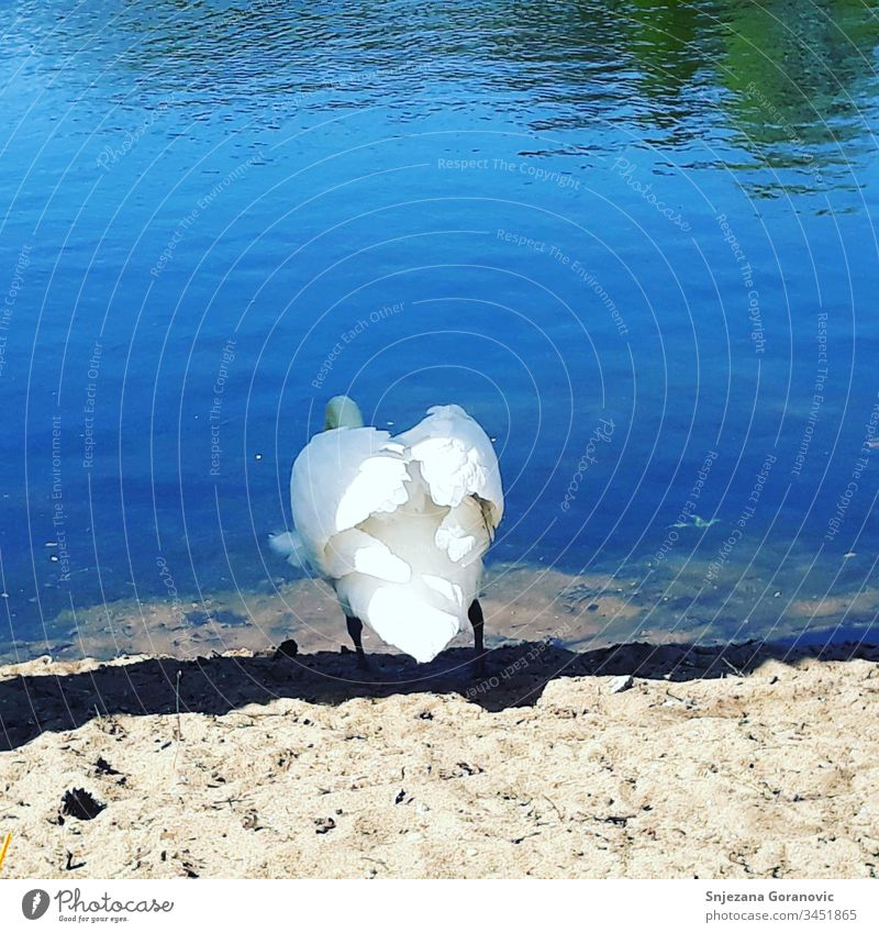 Swan Lake the sun blue water enjoy the outdoors The lake the swan
