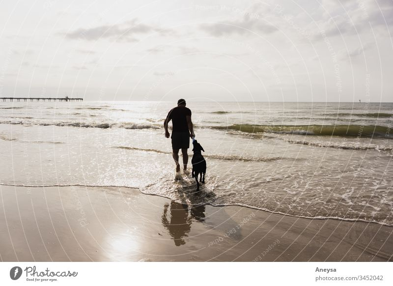 A man and his dog playing on the beach 2017-2020 first import texas doggy best friend man's best friend pet Dog Animal summer summer's day friendship love