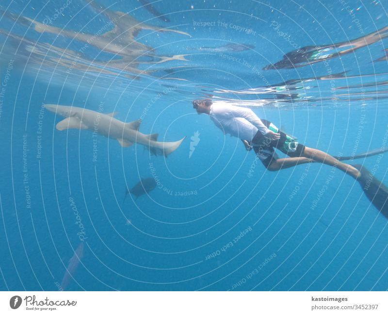 Male free diver and nurse shurk, Ginglymostoma cirratum, hovering underwater in blue ocean. shark nurse shark sea freediver marine snorkeling scuba wild diving