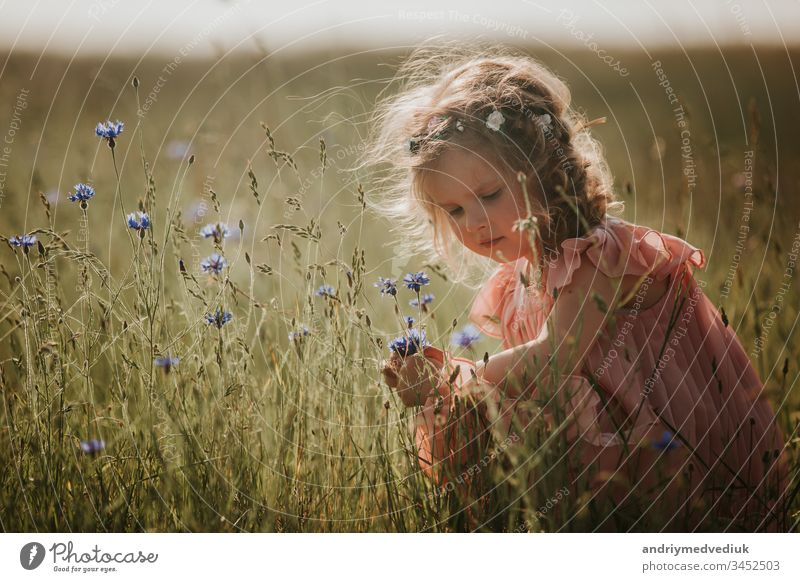 girl in a field collects a bouquet of flowers. little girl collects flowers in the field child grass summer nature bloom kid lifestyle beautiful beauty dress