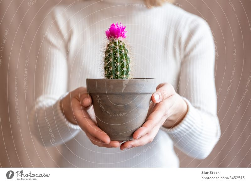 Woman holding a cactus pot flower woman hands plant florist gift floral indoor show background person female bloom botanical flowers green girl closeup potted