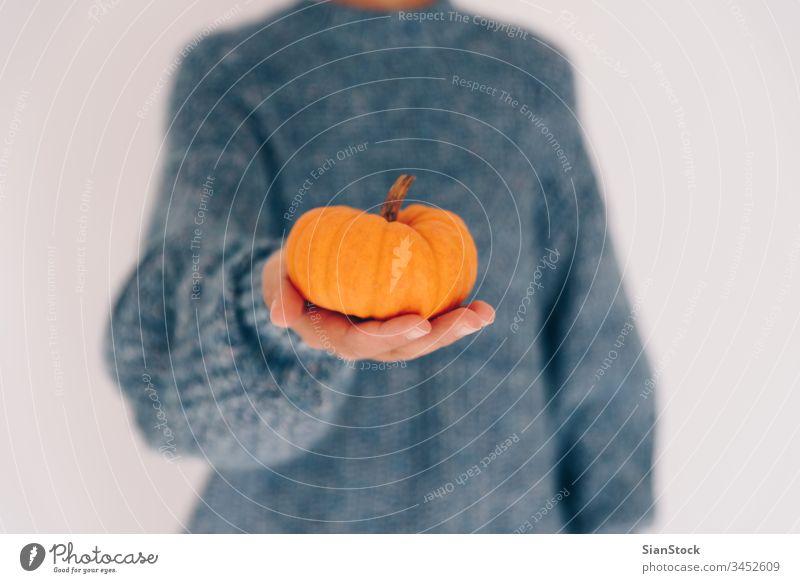 Women's hands holding pumpkin. Halloween, Thanksgiving day little fruit isolated cook winter blue soft thanksgiving november sweater healthy orange food autumn