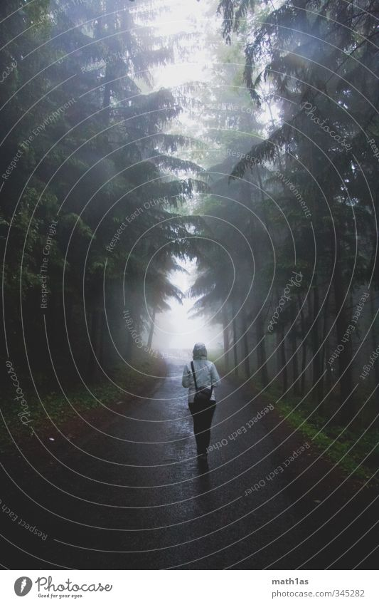 Nature Vacation & Travel Tree Forest Street Going Fog Hiking Adventure Hope Avenue Clearing Tunnel vision