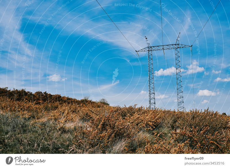 """Galician landscape full of """"tojos"""" with an electrical tower agriculture beautiful beauty blossom bright colorful country farm field flower gorse green meadow"""