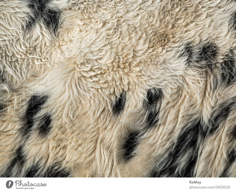 Cow skin as background Pelt Cowhide animal fur Cattle black-and-white Speckled Nature Animal Natural structure texture Abstract full screen Horizontal