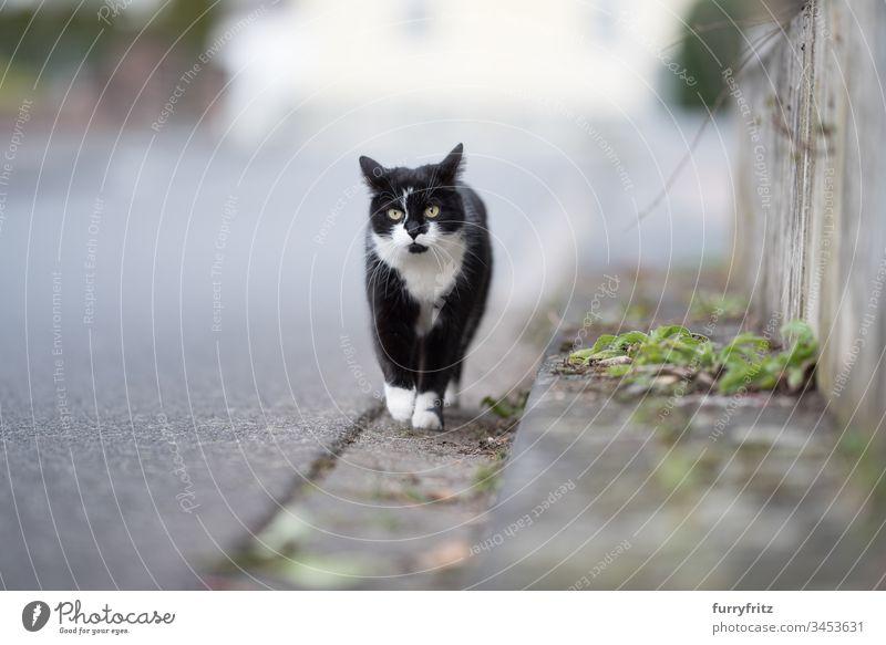 black white cat running down the street black on white Cat Street Movement Curb animal eye animal hair bokeh Curiosity Domestic cat folded back ears