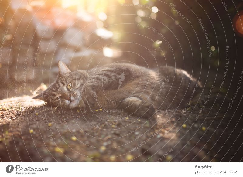 Cat rolling in the dirt Outdoors look into the camera Enchanting animal behavior animal eye animal hair bokeh Refrigeration Comfortable Cute Domestic cat