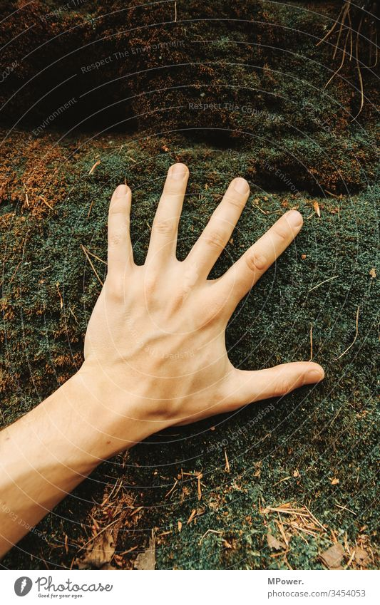 Hand on moss Nature Moss Forest Exterior shot Plant Green Colour photo Macro (Extreme close-up) Close-up Environment Detail Foliage plant Fingers feel