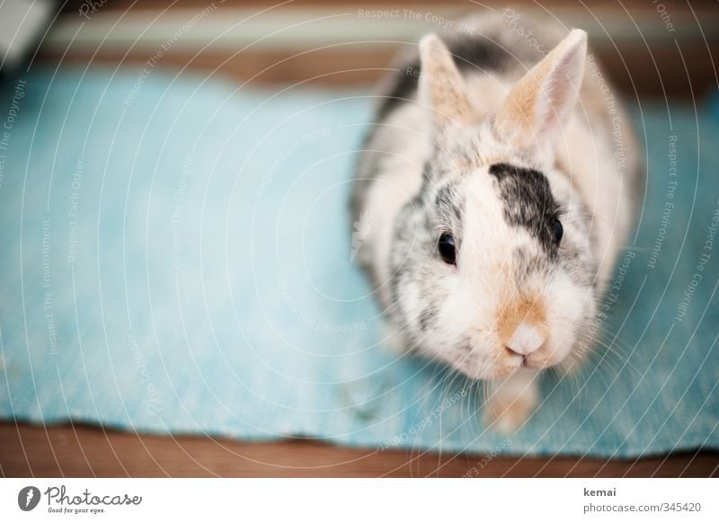 Beautiful Animal Eyes Small Sit Cute Nose Curiosity Pelt Ear Animal face Watchfulness Pet Hare & Rabbit & Bunny Interest Sympathy