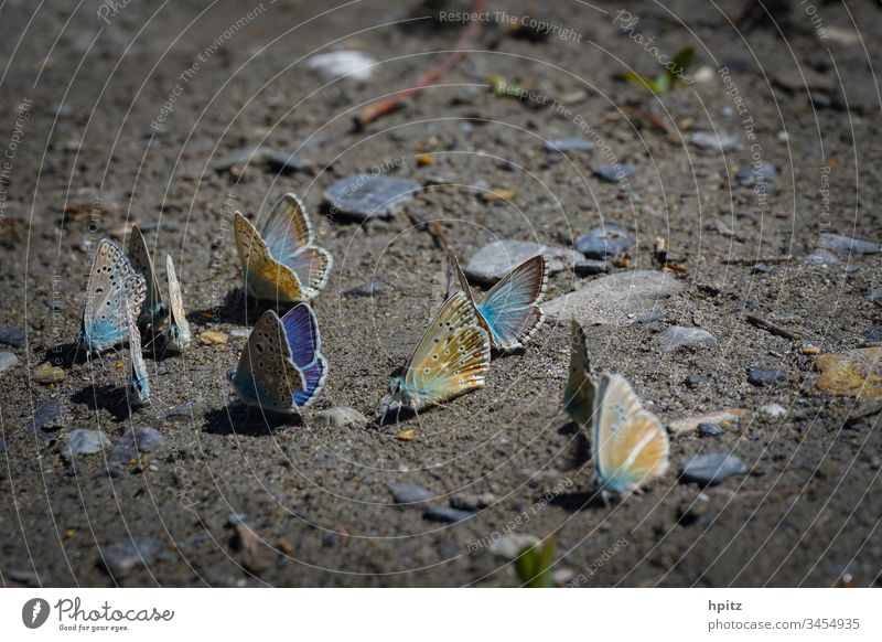 Flight pause for butterflies Colour photo Flying Blue Flight break Exterior shot Butterfly Close-up Nature Grand piano