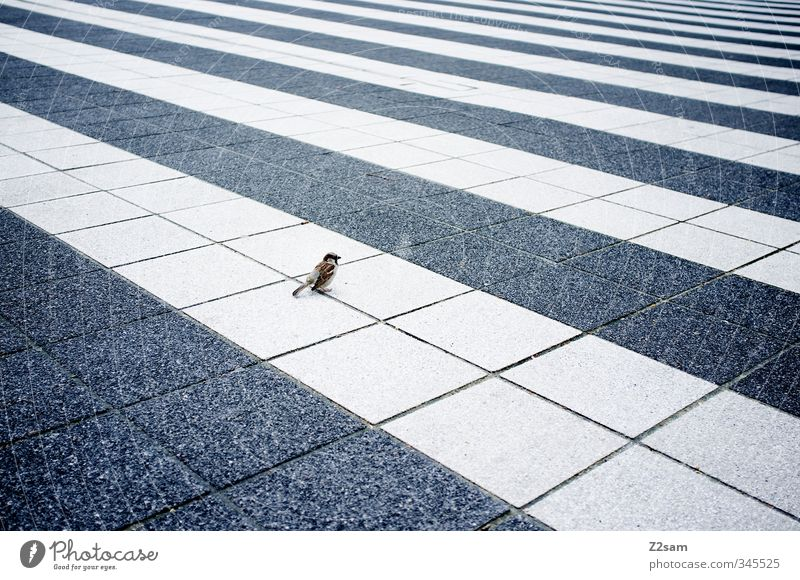 vogi Town Places Architecture Bird Sit Simple Cold Small Modern Curiosity Cute Blue Self-confident Serene Calm Loneliness Elegant Center point Perspective