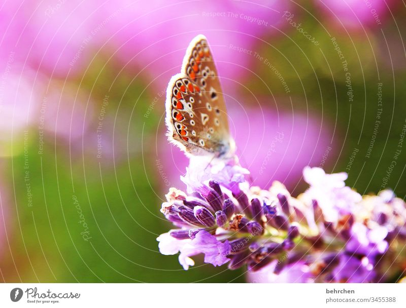 as light as a feather Animal portrait Blur Sunlight Deserted Close-up Colour photo Easy Hover Nectar Pollen already Exotic Elegant Exceptional To feed Flying