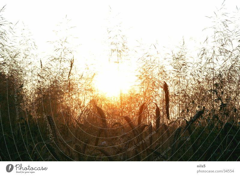 Warmth Glittering Physics Hot Grain Summer's day