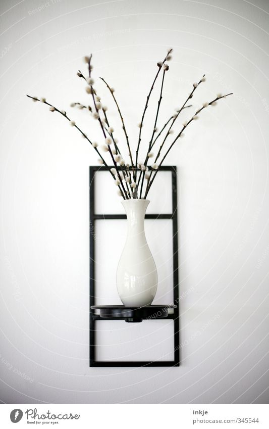 graphic | the organic must be in front of square Living or residing Decoration Plant Catkin Bouquet Vase Wall decoration Bracket Line Blossoming Thin