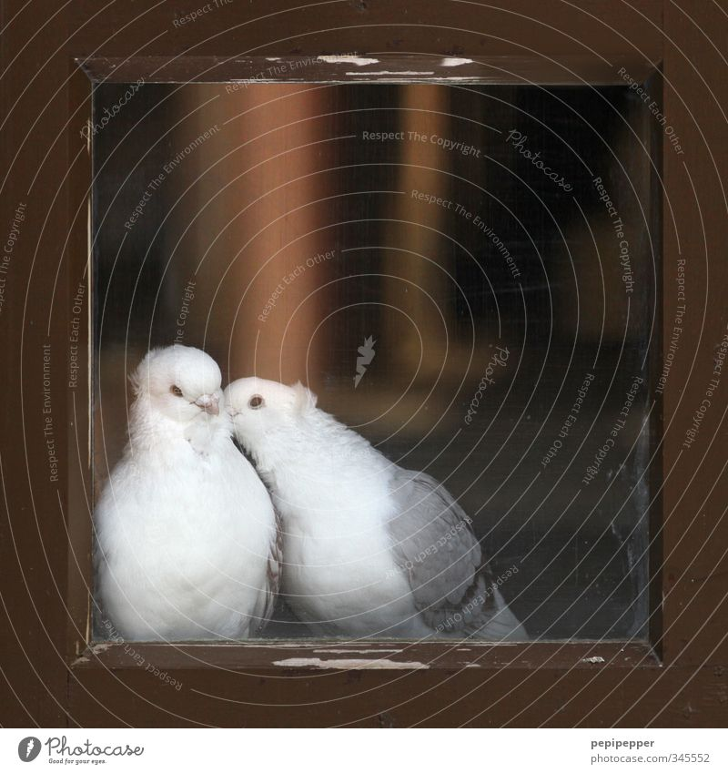 Animal Window Love Emotions Wood Happy Friendship Bird Together Pair of animals Glass Wing Protection Pelt Animal face Kissing
