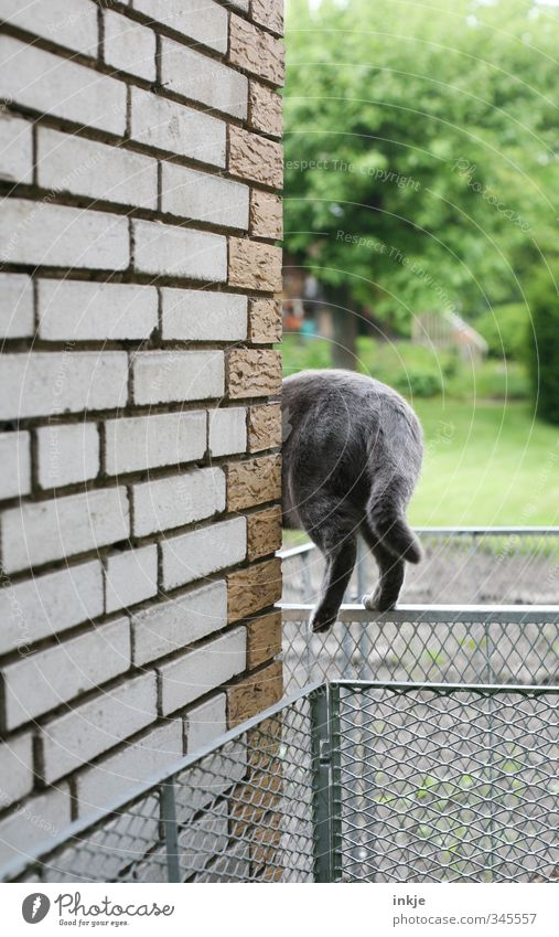 No way is too difficult... Gardening Environment Nature Spring Summer Tree Grass Deserted Wall (barrier) Wall (building) Lanes & trails Animal Cat 1 Compost