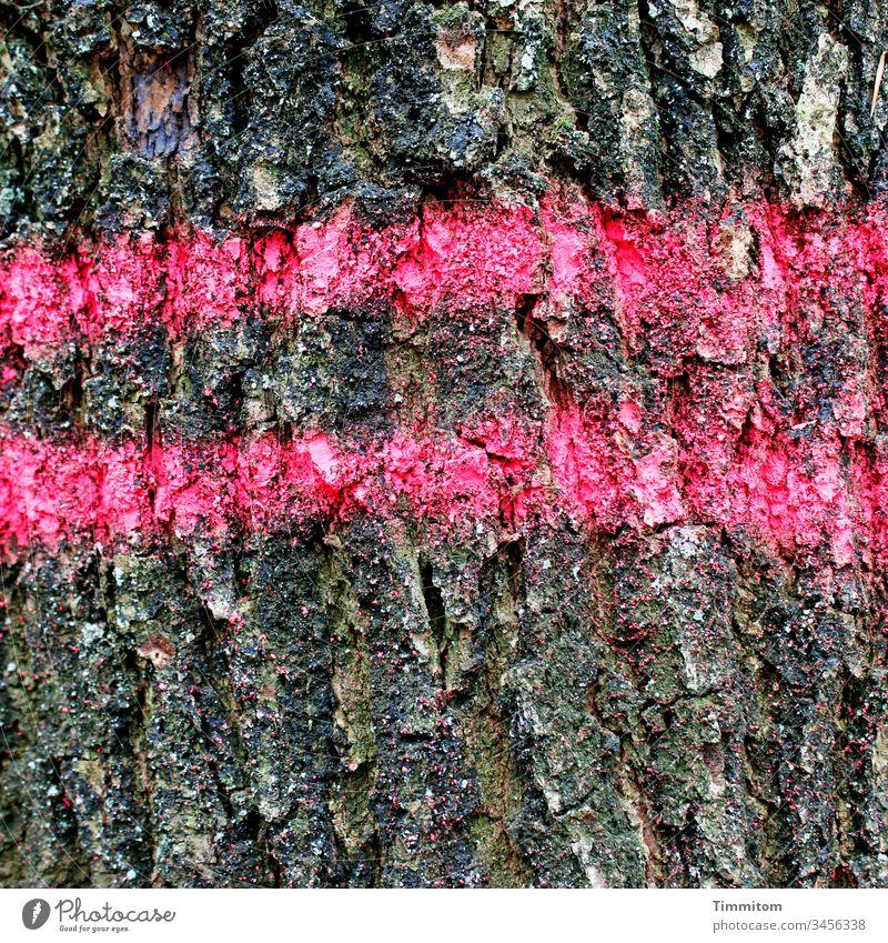 Tree marking - back lane bark tree Return route wood Forest Nature Brown Pattern pink Environment Timber