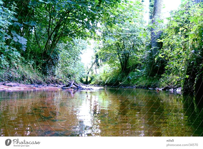 Nature Water Tree Green Plant Forest Landscape Coast River Idyll Brook Lanes & trails Wayside Water reflection