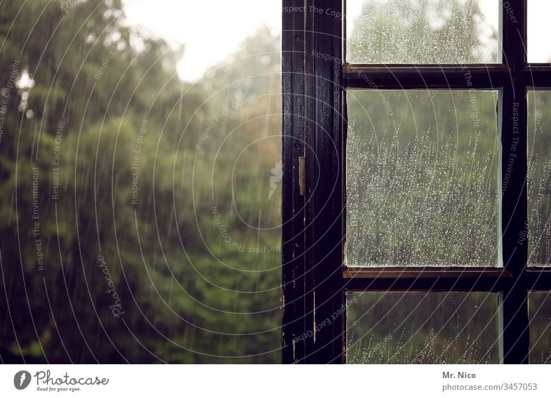 rainy Rain Drops of water Water Wet Damp Autumn Weather Window Window pane Bad weather Sadness View from the window Wooden window Tree Garden open window