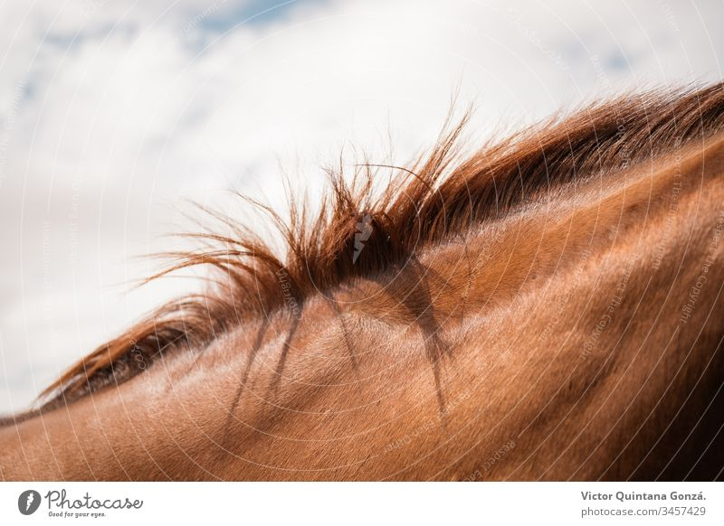 Horsehair detail agrarian agricultural animal backwoods bucolic cavalry europe fashion fur glamour grass hairstyle idyllic isolated mare nature no person one