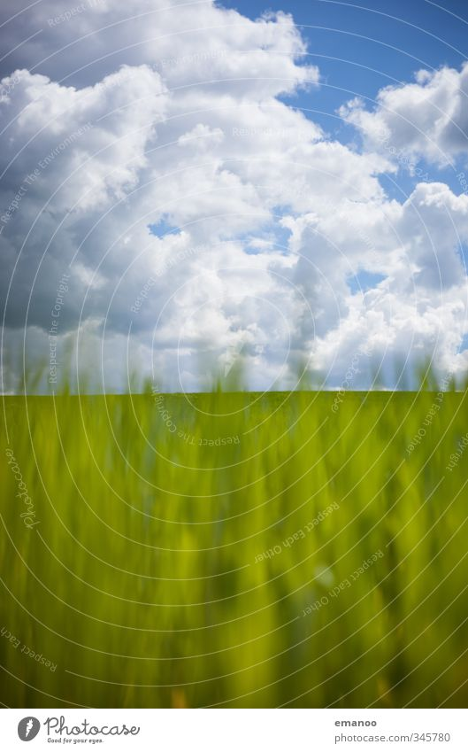 Sky Nature Blue Green Summer Plant Landscape Clouds Environment Meadow Grass Spring Horizon Air Park Weather
