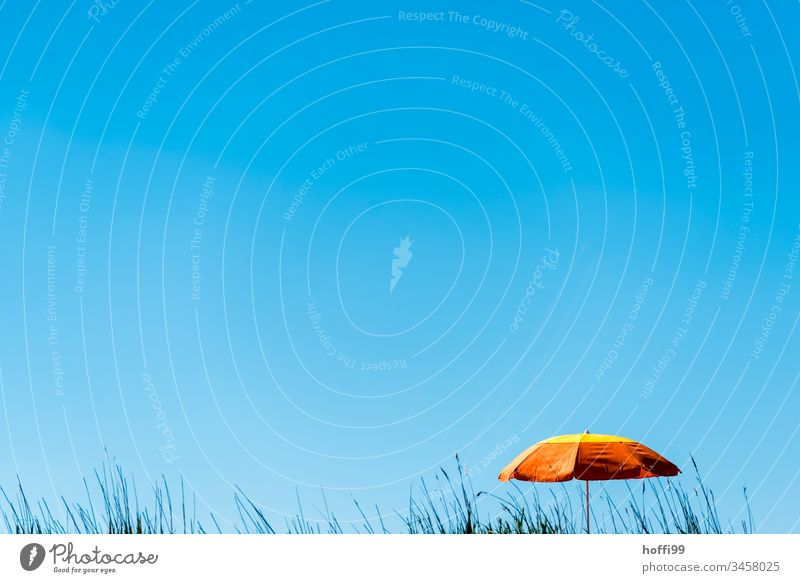 orange parasol in front of a blue sky with beach grass Blue minimalism minimalitic North Sea Orange Umbrella Sunshade Orange-red Cloudless sky Blue sky Beach