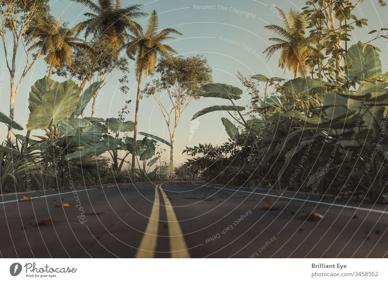 Street in the jungle with yellow line in the middle lane Direction Environment Tropical foliage Summer urban vegetation trees lines Perspective center Ground