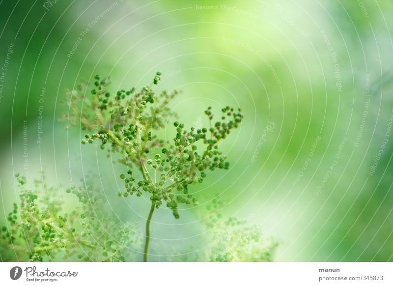 Nature Green Summer Plant Spring Growth Foliage plant Wild plant Spring fever Bright green Spring colours