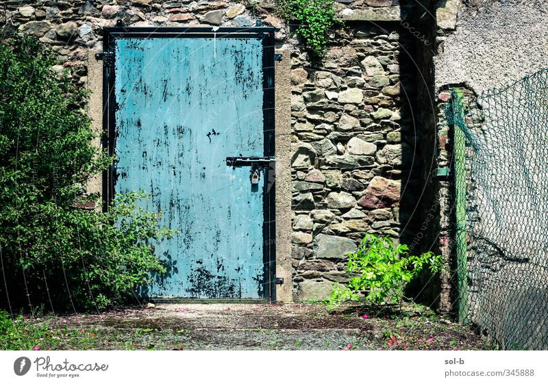 blue Living or residing Garden Nature Plant Bushes Ivy Building Architecture Wall (barrier) Wall (building) Door Stone Concrete Lock Old Poverty Natural Blue
