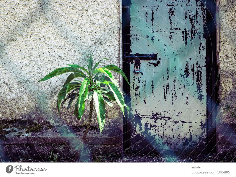 plant guarding door. Blue Old Green Plant Loneliness Cold Wall (building) Sadness Wall (barrier) Building Fear Door Poverty Closed Uniqueness Protection