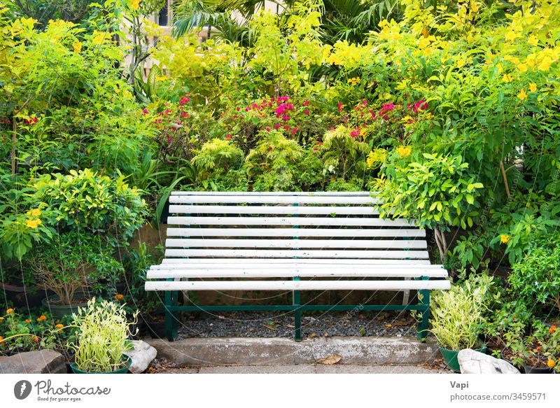 Bench in green tropical garden park bench empty nature foliage spring summer palm bloom natural blossom flower season seat vintage fresh color beautiful outdoor