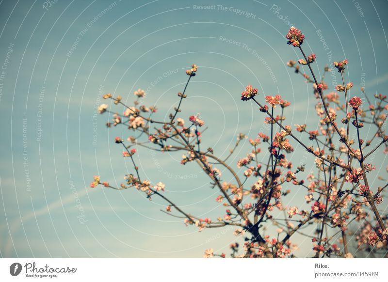 Spring tenderness. Summer Garden Environment Nature Plant Sky Tree Blossom Blossoming Esthetic Fragrance Beautiful Natural Joie de vivre (Vitality) Growth