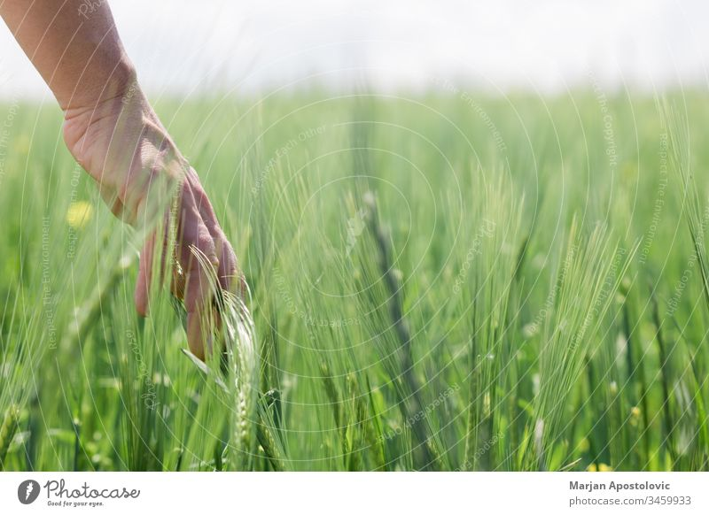 Close-up of a hand touching tall grass in the field agriculture background care close-up concept conservation day delicate development earth ecology environment