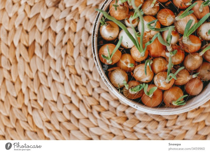 Fresh home grown onions in a plastic container on a natural braided background agriculture april bulb chives closeup concept crop detail diet easter eating