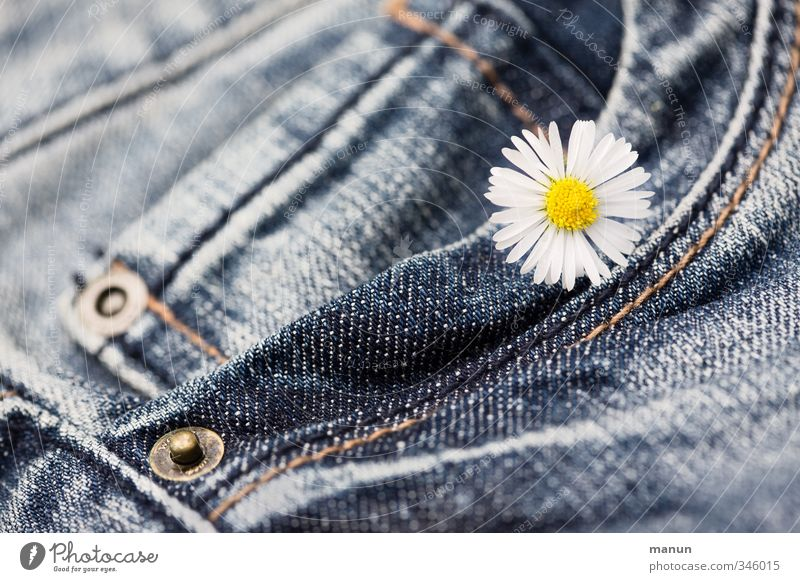 flowered trousers Flower Blossom Daisy Clothing Pants Jeans Happiness Kitsch Funny Natural Classic Colour photo Close-up Deserted Copy Space left